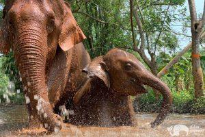 Elephant Heaven ethical elephant tour