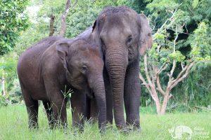 Elephant Heaven ethical elephant project