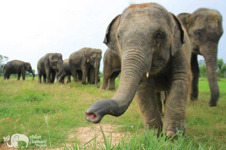 Elephant_Homestay_KhunChaiThong