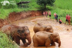 ethical elephant tour chiang mai