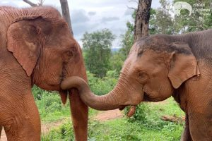 ethical elephant sanctuary chiang mai