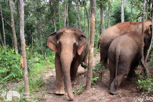 Ethical Elephant Tour Chiang Mai Karen Elephant Experience