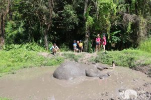 Karen Elephant Home elephant mudbath