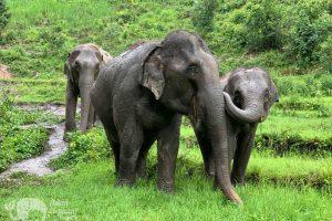 Ethical elephant tour Karen Elephant Habitat
