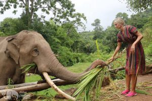 feeding elephants at ethical elephant project