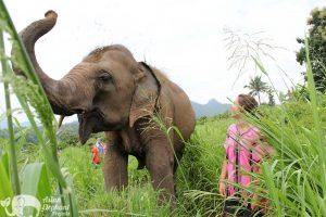 Karen Elephant Retreat observing elephants
