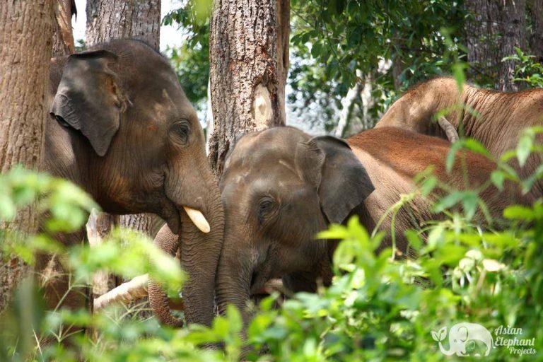 Karen Elephant Experience