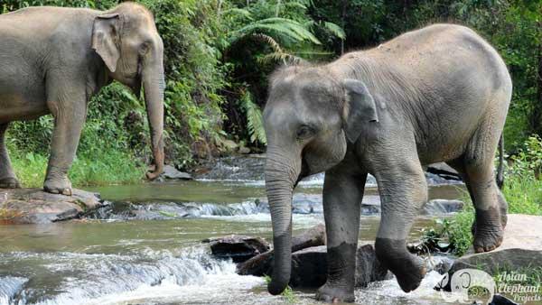 Karen_Elephant_Habitat