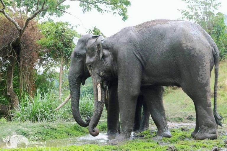Karen_Elephant_Home