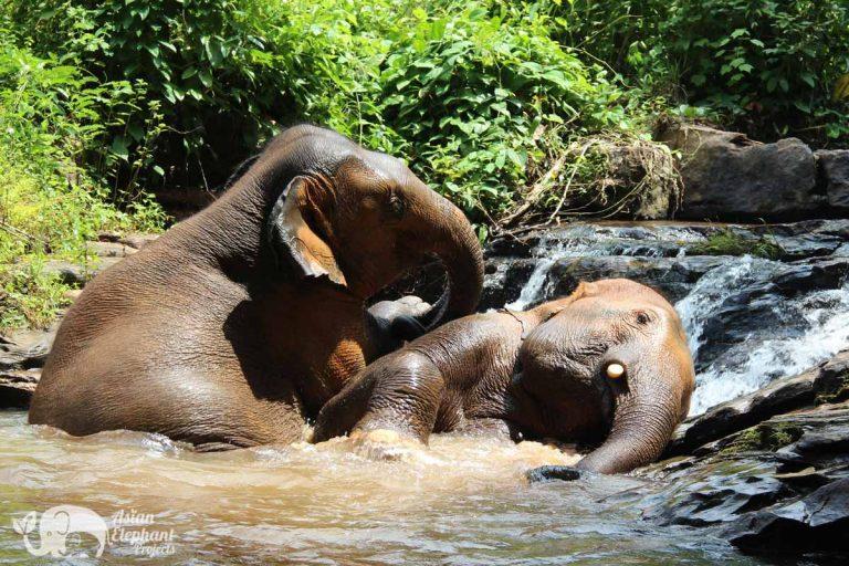 Karen_Elephant_Reserve