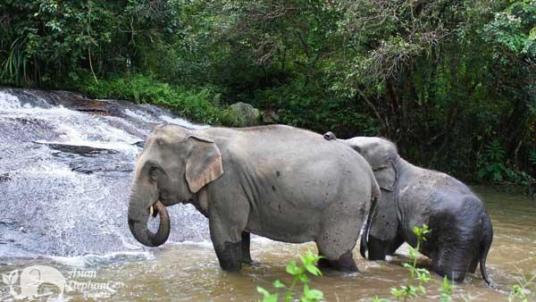 Karen_Elephant_Retirement_4
