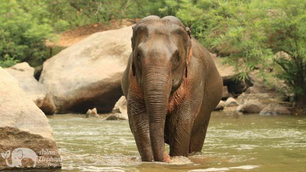 Majestic_Elephant_Project