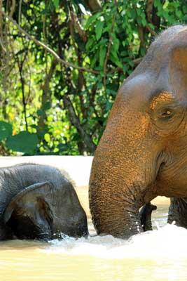 Pattaya_Elephant_Sanctuary