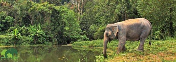 Pkuket_Elephant_Park_Phuket