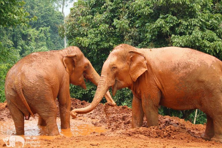 Save Thai Elephant Park