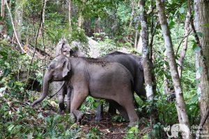 Journey to Freedom Volunteer with Elephants