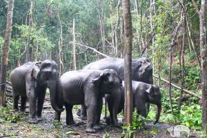 Journey to Freedom Elephants in the jungle