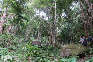 Journey to Freedom Volunteer watch Elephants