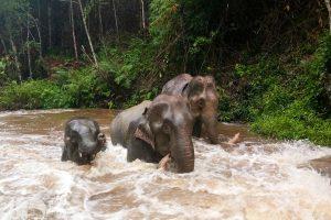 Karen Elephant Habitat elephants bathing