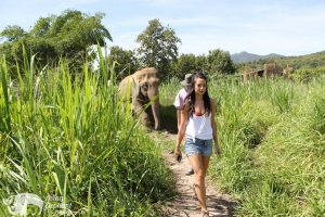 Karen Elephant Retreat walking with elephants