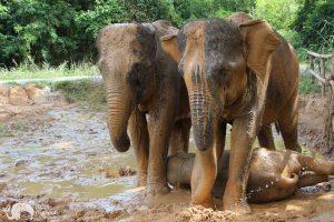 Karen Elephant Retreat ethical elephant tour