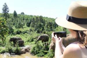 photographing elephants at ethical elephant tour