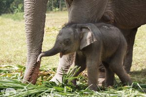 Baby Elephant Karen Elephant Retirement