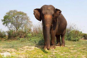 Surin Project Elephant Volunteer