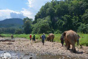 Elephant Freedom walking with elephants
