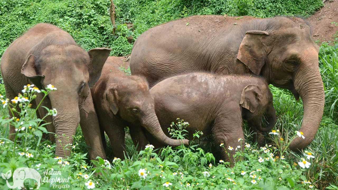 Elephant Freedom Ethical Elephant Tour