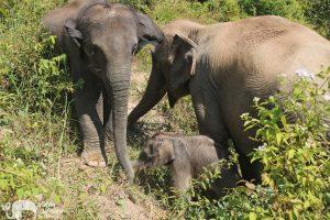 Baby elephant Karen Elephant Habitat