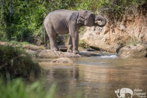 Ethical Elephant Tour Karen Elephant Retirement