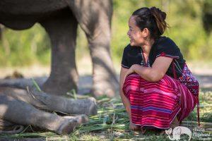 Karen Hill Tribe Ethical Elephant Tour Karen Elephant Retirement
