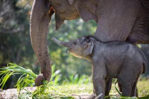Karen_Elephant_Retirement