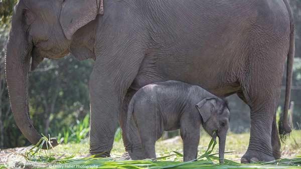 Baby Elephant Karen_Elephant_Retirement