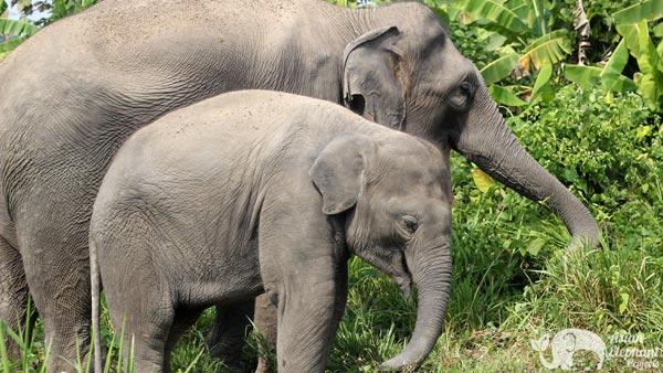 Baby elephant Karen Elephant Retreat