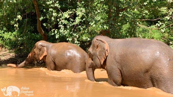 Elephant_Delight