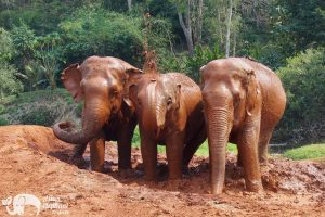 Hope for Elephants ethical elephant project