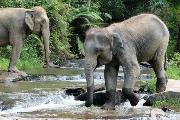 Karen Elephant Habitat Ethical Elephant Tour