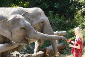 Karen Elephant Oasis feeding elephants