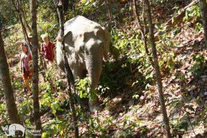 Karen Elephant Oasis walking with elephants