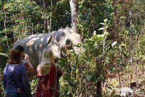 Karen Elephant Oasis observing elephants