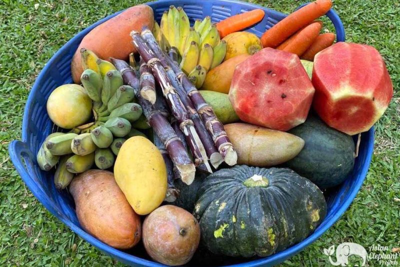 Elephant Food Gift Package - Basket of Fruit & Vegetables
