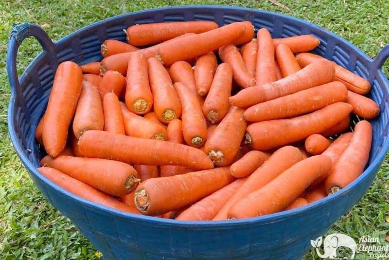 Basket of Vegetables - carrots for the elephants