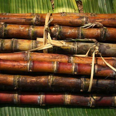 Bundles_Sugarcane