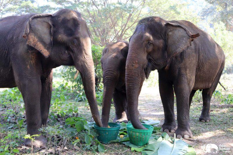 Care_for_Elephants fruit baskets