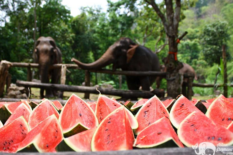 Elephant Food Aid Package - Tub of Watermelons