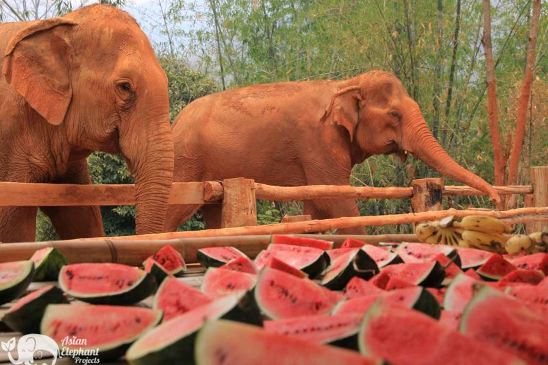 Elephant Food Aid Package - Watermelons