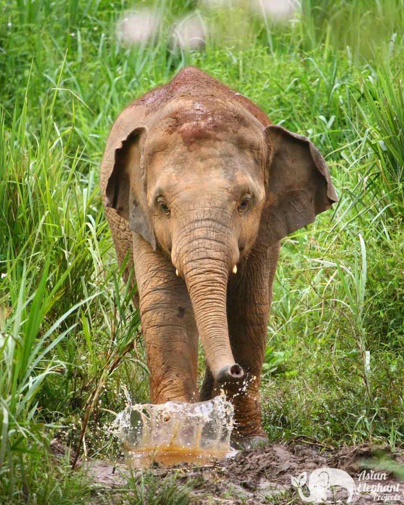 Photograph Elephant Green Hill