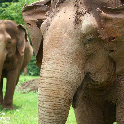 Elephant Highlands Asian Elephant Projects